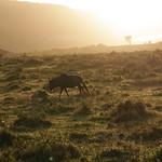 Sonnenuntergang, Südafrika