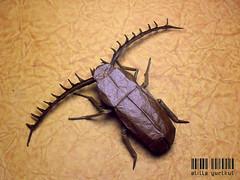 Cyriopalus (atilla yurtkul) Tags: insect origami hung nguyen cuong böcek atilla cyriopalus dargelirli yurtkul