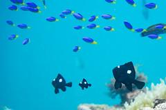 20150829-DSC_9645-2.jpg (d3_plus) Tags: sea sky fish beach japan scenery underwater diving snorkeling  shizuoka    apnea izu j4  waterproofcase    skindiving minamiizu       nikon1 hirizo  1030mm  nakagi 1  nikon1j4 1nikkorvr1030mmf3556pdzoom beachhirizo misakafishingport  1030mmpd nikonwpn3 wpn3