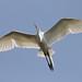 sunny egret