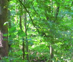 Koediefslaan (seanclen) Tags: fugue herberg vluchtweg wauws berkenrode oudheemstede medicibezoek berkenrodeoverleg