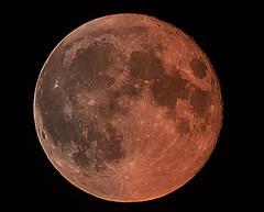 Red Blood Moon (Muzammil (Moz)) Tags: fullmoon telephoto canon100400l muzammilhussain canon5dmarkiii redbloodmoon mozhapsyahoocouk