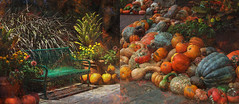 Ponder Among the Pumpkins (lensletter) Tags: autumn orange fall gourds night photomanipulation bench pumpkin gold diptych pumpkins arboretum auburn gourd golds theawardtree autumndiptych kreativepeoplegroup lensletter pilesofpumpkins