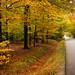 Efterår i Varde Kommune