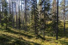 Soiperoinen (Juho Holmi) Tags: mountain lake macro nature beautiful k suomi finland dc scenery finnland view pentax 5 sigma 45 vista 17 28 af northern norra 70 k5 finlandia luonto jrvi sterbotten ostrobothnia taivalkoski 1770mm f2845 koillismaa pohjoispohjanmaa soiperoinen pyhitys
