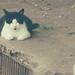 Little (fat?) stray cat