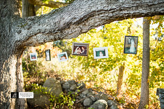 The Memory Tree at Priam Vineyards in Colchester, CT (M-M_Photo) Tags: pictures wood family november autumn wedding tree green fall love beautiful leaves photography groom bride photo leaf october pretty photographer connecticut details dream ct marriage september fallfoliage foliage bark memory familytree string dreamy colchester pictureframe memorytree weddingdecorations colchesterct connecticutphotographer priamvineyards memorytreeweddingtreepicturesframeslovedecorationsdecor