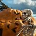 Evil Minion of The Great Pumpkin ( (2015 Halloween series)