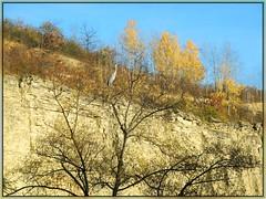 Fischreiher auf dem Baum (almresi1) Tags: autumn cliff tree bird germany rocks herbst baum ludwigsburg vogel felsen klippen steinbruch reiher fischreiher kranich remseck rems