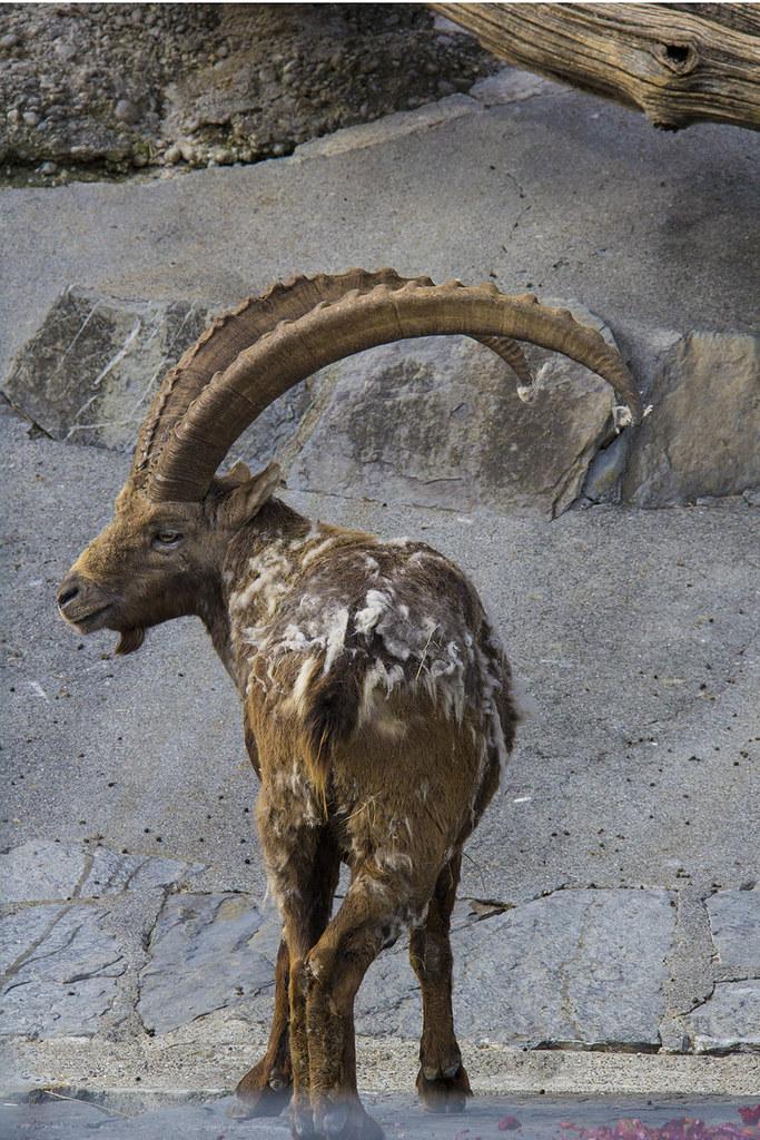 Tierpark bode da montanha