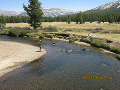 Floating on the Tuolumne River at  bridge near Parsons Lodge       8-11-15 a (Bob_ Perry) Tags: yosemite tuolumne tuolumnemeadows tuolumneriver