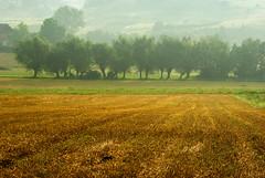 Poranna mgła 18 (Hejma (+/- 5400 faves and 1,7 milion views)) Tags: trees green nature yellow fog landscape outside poland polska august natura zielony stubble mgła żółty drzewa krajobraz sierpień rżysko cultivations uprawy chłopskiepola płaskowyżproszowicki peasantfields plateauproszowicki