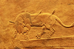 Assyrian Lion Hunt: The Fallen Lion (praja38) Tags: city uk england pierced london art history wall museum carved ancient mural king display britain great lion culture palace historic arrows british nineveh currently hunt reign assyrian ashurbanipal northpalace