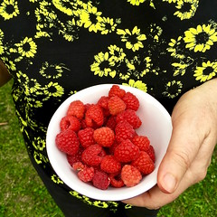 'Summer In Australia' - December, 2015 (aus.photo) Tags: red summer fruit yummy australia bowl fresh canberra raspberries act cbr nutritious australiancapitalterritory ausphoto