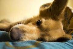 Taking a nap. (Giuseppe Chirico) Tags: photo photography art shadow shadows light lights morning nature pet pets animal animals dog dogs eyes portraits portrait yellow closeup winter cold color colors colorsinourworld colour colours cuddle sleep sleeping
