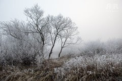 In balance (=Я|Rod=) Tags: fujixt1 nebel winter wümme fog mist reif