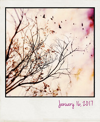 Lantern tree (jeanne.marie.) Tags: polaroidfx 3652017 iphoneography iphone7plus 365the2017edition day16365 16jan17 lantern tree lanterntree purple pink golden