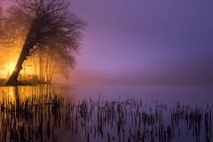 Lake Light (Rob Scamp) Tags: le longexposure lake herefordshire night mist misty trees robscamp nikon dusk woodland woods d810