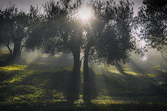 Sacred light (Galep Iccar) Tags: light lights mourning mattino nature natura natur green olive umbria