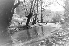 Tzielefos bridge in b&w (msiapan) Tags: tzielefos bridge bw cyprus medieval stone water flow rainfall τζιελεφόσ τζιελεφού γεφύρι μεσαιωνικό μαυρόασπρο pafos forest arminou dam πέτρινο ενετικό κύπροσ πάφοσ