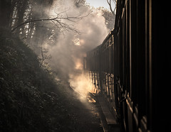 If you go down to the woods today (Blaydon52C) Tags: tanfield railway rail railways trains train transport steam engine marleyhill causeyarch durham trams locomotive locomotives loco locomotion hawthornleslie atmospheric atmosphere stanley sunniside easttanfield sun trees woodland smoke