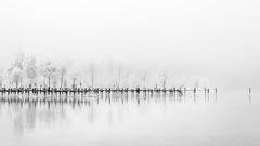 foggy, frosty day (hjuengst) Tags: chiemsee winter frost fog foggy mist misty tree blackandwhite minimalism highkey bavaria prien winterbeauty geotagged nikond7200 surreal