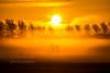 Horse in the fog (Dennis-Dieleman) Tags: uitgeest horse paard sunrise sun sunshine fog mist trees animal meadow mysterious truck skyporn sky landscape holland dutch netherlands nederland vocht shadow horses silhouette zonsopkomst platteland bird birds clouds cloud lightpole