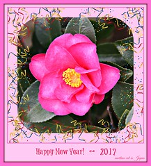 Happy New Year ~ 2017 (martian cat) Tags: yokohama japan camellia allrightsreserved© flower nature ©allrightsreserved martiancatinjapan© martiancatinjapan ☺allrightsreserved allrightsreserved ©martiancatinjapan ☺martiancatinjapan martiancat happynewyear glücklichesneuesjahr omedettogozaimasu ハッピーニューイヤー 明けましておめでとうございます bonneannée felizañonuevo buonanno