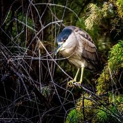 Waitr (Portraying Life, LLC) Tags: unitedstates arizona tucson bird wetland nativelighting handheld sweetwaterwetlands