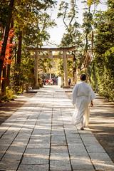 Sacerdote caminando. Priest walking (thaisa1980) Tags: 2016 hachimangū kamakura kannushi santuario shinto shintoist tsurugaokahachimangu blanco camino japan japanese japon japón nippon nipponese paseando path sacerdote shrine sintoismo sintoista stairs torii walking white