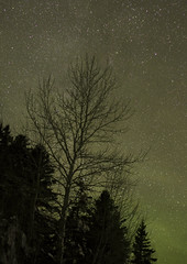 Christmas Milky Way (Danny VB) Tags: christmas milkyway milky way stars silhouette tree night gaspesie valdespoir quebec canada canon eos 6d ef50mmf18ii noel navidad december winter snow cold hiver