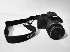 Bienvenue. (Anasnap136) Tags: reflex photo 100d merci 30ans cadeau anniversaire nouveau filtre pigeon canon