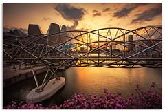 Helix bridge sunset (.Wadders) Tags: marinabay helixbridge bridge singapore sunset 2016 water d600 ngc nikonfxshowcase nikkor1635mmf4