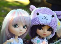 lilac girls (Sia ♥) Tags: pullip kiyomi papin stica paja alpaca