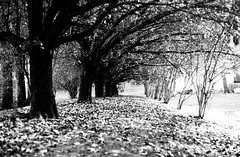327/366 Road to Nowhere (Film) (Bernie Anderson) Tags: ifttt 500px trees adamsville black white bw fall landscape leaves light project 365 366 shadow tennessee tn