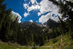 Tetons from Within (kayladanielle303) Tags: grandtetonnationalpark wildlife wyoming mountains summer