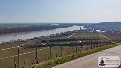 Rhein und Nierstein