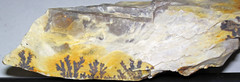 Manganese oxide dendrites on flint (Vanport Flint, Middle Pennsylvanian; Nethers Flint Quarries, Flint Ridge, Ohio, USA) (James St. John) Tags: vanport flint allegheny group pennsylvanian muskingum county ohio ridge nethers quarries quarry chert manganese oxide dendrite dendrites pyrolusite