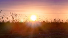 Sunset/Puesta del Sol (thefoxyfoxofthewest) Tags: huerta orchard huertadenogales walnuttrees paisaje countryside escena scene rústico rustic country landscape nature naturaleza paz peace