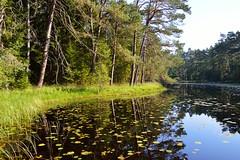 Etang-tourbire du Welschkobert Haut (Croc'odile67) Tags: nature forest landscape nikon paysage tang eaux forets d3200 vosgesdunord afsdx18105