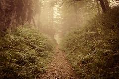 Foggy Path (oliko2) Tags: wood autumn trees mist mountain nature rock fog forest switzerland path atmosphere lausanne rochersdenaye nikond7100