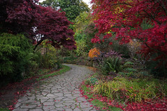 """The Garden of Eden"" (Pensioner Percy, very slow at the moment) Tags: nikon parks sigma autumncolors cumbria carlisle sigma1020f456 rivereden thegardenofeden d7100 thechinesegardens edenbridgegardenscarlisle acdseeultimate9"