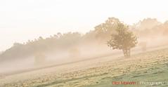 Hatfield_Forest-20 (Eldorino) Tags: park uk morning autumn trees nature forest sunrise landscape countryside nikon britain centre jour hatfield bishops stortford essex hertfordshire stanstead hatfieldforest