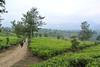 Tea Farm (iqronaldo) Tags: fish west garden java fisherman mess tea farm web teh bandung jawa waduk rumah malabar barat pangalengan danau situ boscha bosscha cileunca belanda nusantara perkebunan cipanunjang