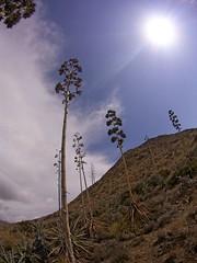 Sol con pitacos (AAcero) Tags: cabodegata almeria genoveses sj5000