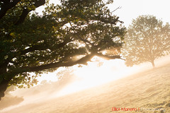 Hatfield_Forest-33 (Eldorino) Tags: park uk morning autumn trees nature forest sunrise landscape countryside nikon britain centre jour hatfield bishops stortford essex hertfordshire stanstead hatfieldforest