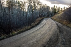 Backroads  (EXPLORE #6) (evanffitzer) Tags: trees outside outdoors stand mud britishcolumbia interior country dirt kamloops dirtroad birch backroads gravel lonley evanffitzer evanfitzer fujix100s