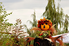 Pumpkin King 7323 (casch52) Tags: thanksgiving autumn orange moon holiday cute fall halloween gourds face field hat smiling festival fruit illustration night feast fence garden dark season pumpkin happy design scary october funny symbol traditional farming seasonal guard scarecrow decoration harvest straw security vegetable spooky celebration crop figure cheerful scare protection greeting dressed vector