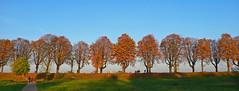 Autumn Colours (TablinumCarlson) Tags: leica autumn 2 panorama tree fall river germany herbst harvest nrw damm landschaftspark rhine rhein baum nordrheinwestfalen rheinland neuss dlux deich rheinallee rhinewestphalia rheinpark rheindamm landschaftsschutzgebiet rheinwiese rheinvorland gnadental