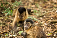 Hey Buddy, You Need  Signed Model Release! (chasingthelight10) Tags: travel nature southafrica photography landscapes countryside events places forests monkeyland thecrags plettenbergbay tsitsikammanationalpark